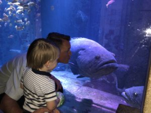 Atlantis, Aquaventure, Bahamas, Family Friendly, Aquarium, Paradise Island, Babymoon, beach vacation, beach destinations,