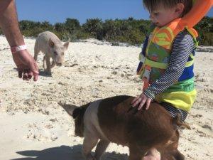 Bahamas, bucket list, adventure, tours, beach, paradise, swimming with the pigs, swimming pigs, Exuma, swimming with sharks, nurse sharks, shark dive, island, beach, best beaches, Carribean