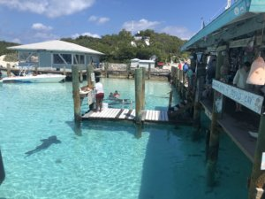 Bahamas, bucket list, adventure, tours, beach, paradise, swimming with the pigs, swimming pigs, Exuma, swimming with sharks, nurse sharks, shark dive,