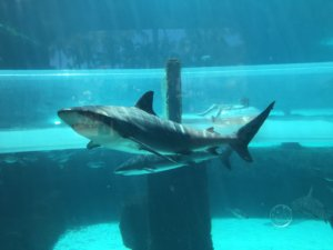 Atlantis, Aquaventure, Bahamas, Paradise Island, Shark Tank, family friendly, beach vacation, destination, bucket list,